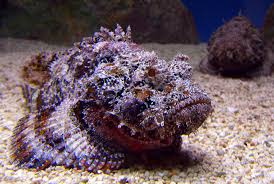 deadliest sea creatures, most dangerous sea creatures, most dangerous sea animals