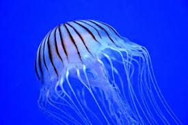 most dangerous sea creatures, most dangerous sea animals